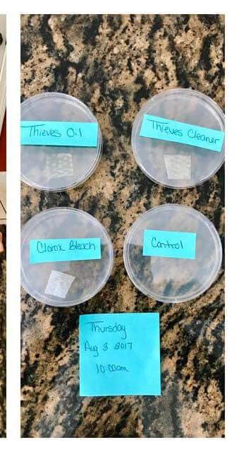 Thieves Petri Dish 3